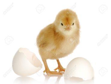 chick robo-advice