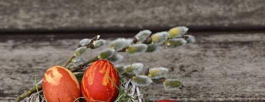 robo nest egg